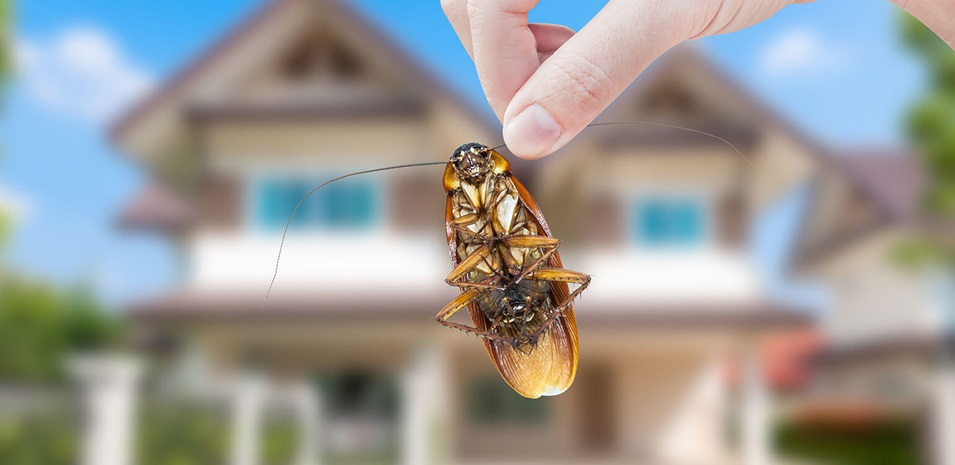 How To Get Rid Of Some Insects In The House